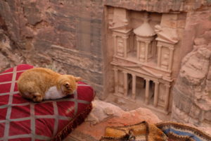 Cat in front of the Khazneh