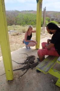 iguanes des petites Antilles a la Baie Mahault