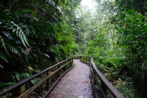 foret tropical de la cascade aux écrevisses