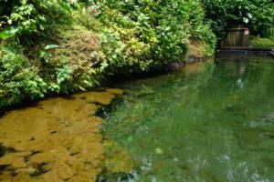 les bains jaunes en Guadeloupe