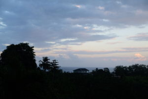 patrice home view