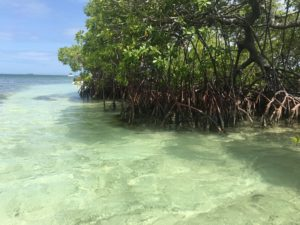 mangroves grand cul de sac marin à sainte Rose