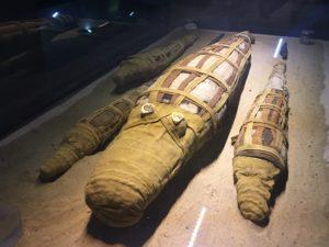 Le musée des crocodiles