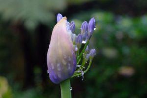 plantes botaniques