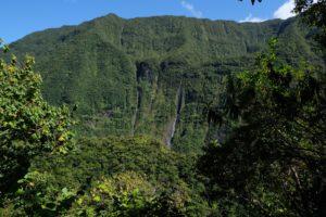 vegetation Tamataka