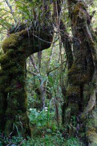 forêt primaire du Trou de fer